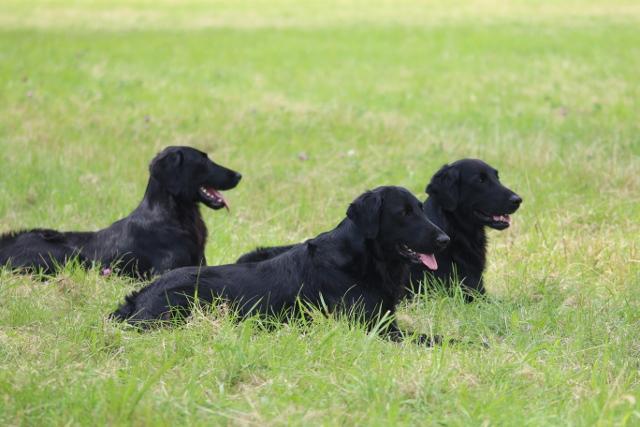 mavisflight-unsere-hunde