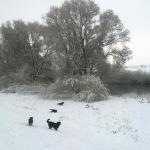 mavisflight-winter-spaziergang-hinterm-haus